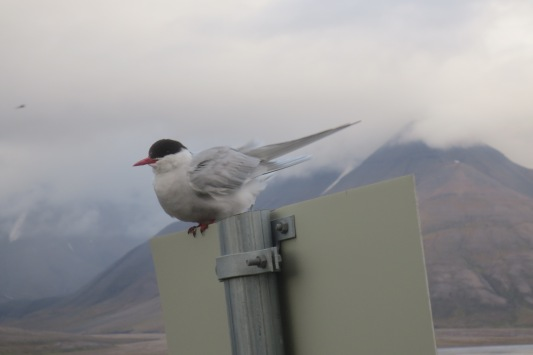 0822Longyearbyen (21)