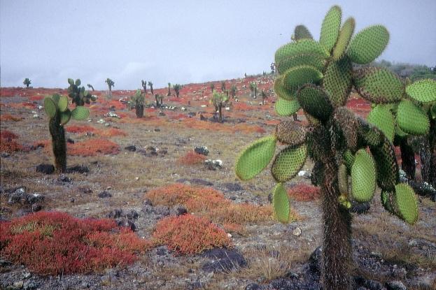 Galapagos91 (12)