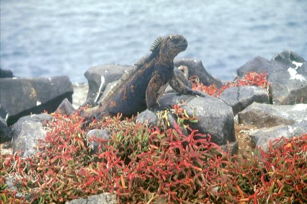 Galapagos91 (5)
