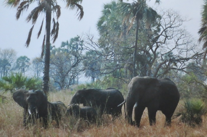 Elefanten im Liwonde Nationalpark © Wolfgang Stoephasius