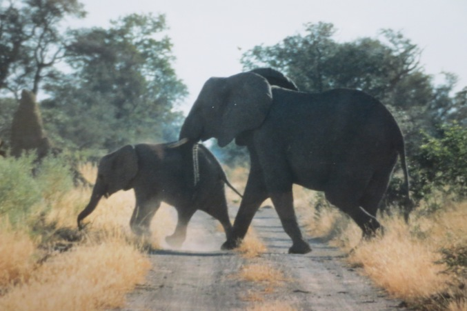 Mudumu-Nationalpark © Wolfgang Stoephasius