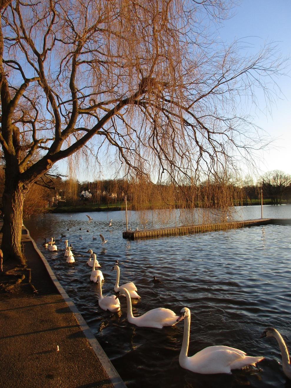 Wimbleton-Park  © Wolfgang Stoephasius