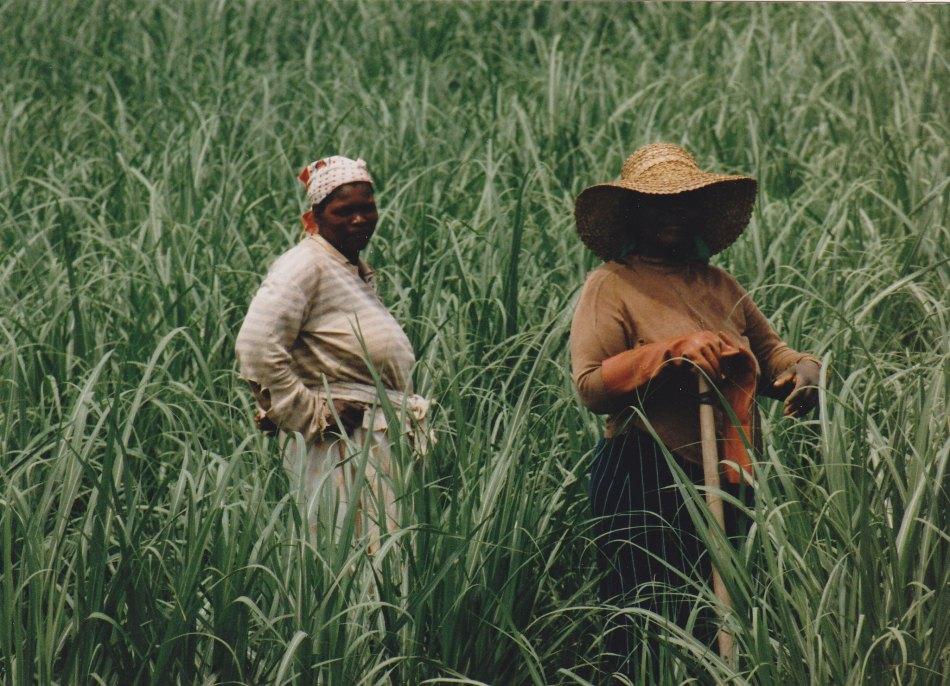 Frauen bei der Feldarbeit in Kwa Zulu © Wolfgang Stoephasius