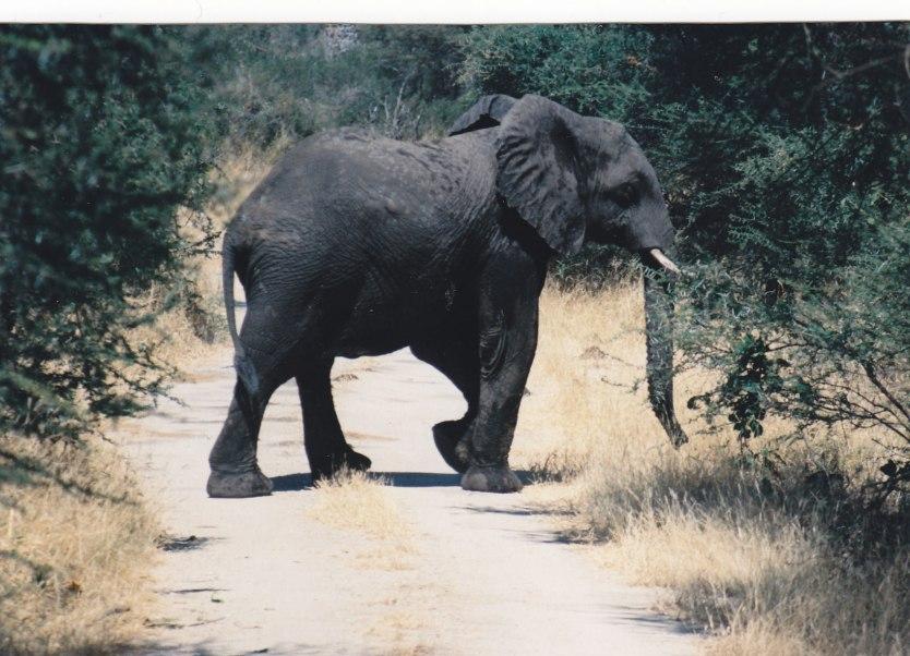 Big five: Elephant © Wolfgang Stoephasius