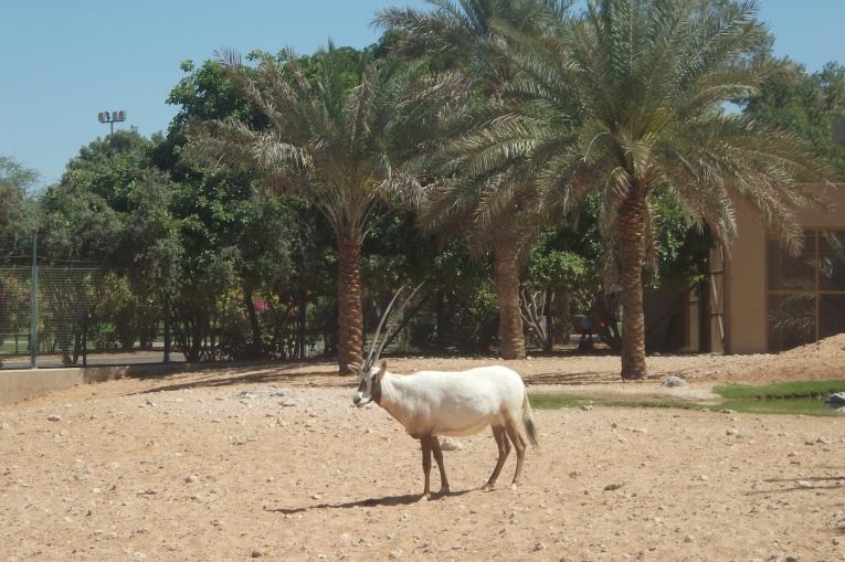 Der Tierpark von Al Ain  © Wolfgang Stoephasius