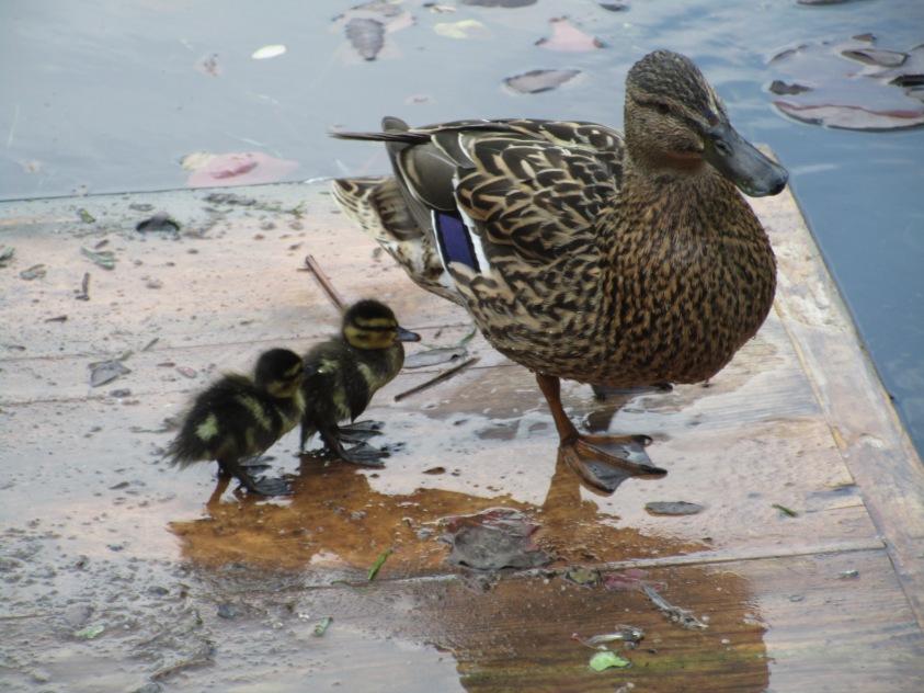 Mutter und Kind im Volkgarten © Wolfgang Stoephasius