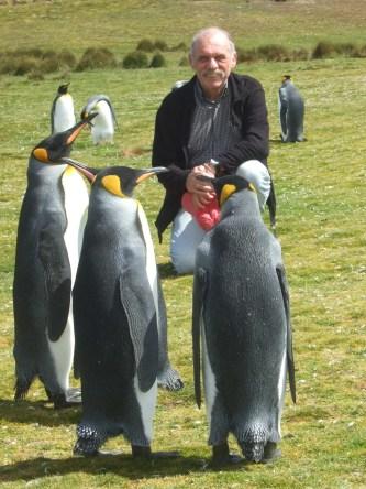 FalklandKönigspinguine